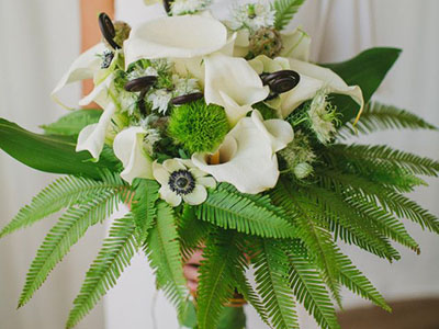 Какие свойства папоротника ценят флористы