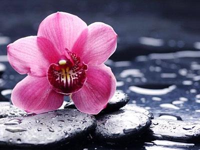 Как ухаживать за цветущей орхидеей