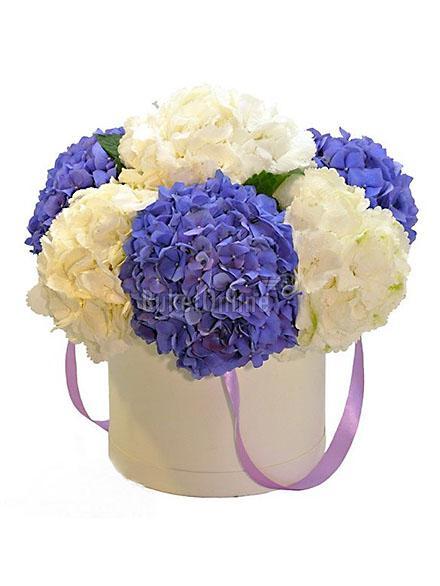 Гортензии купить цветы.москва где можно купить самые дешевые садовые цветы кусты и деревья