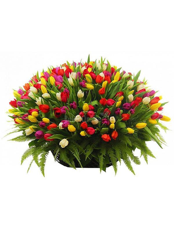 301 тюльпан в корзине