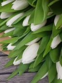 Тюльпаны сорта Айсберг 51 шт