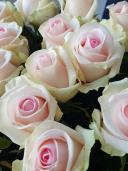 Розы розовые