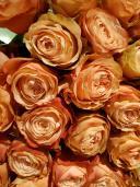 51 роза Кахала