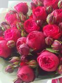 Розы ''Ред Пиано''