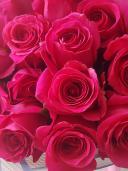 Эквадорская роза - 51 цветок
