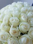 51 белая эквадорская роза