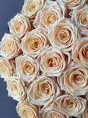 Изысканная роза Беллини