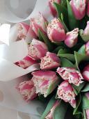 51 махровый тюльпан