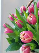 51 пионовидный тюльпан сорта Каламбус