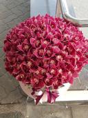 Большая коробка с орхидеей