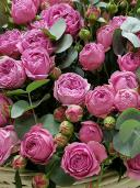 Корзина роз - ''Малиновый жемчуг''